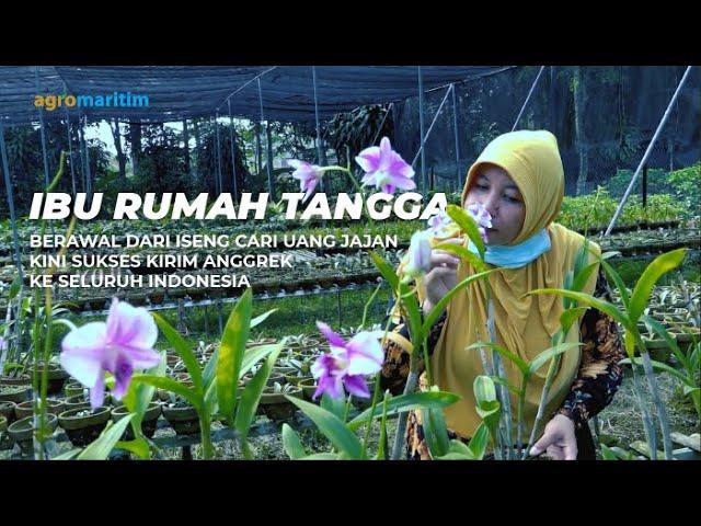 Eksis 10 Tahun Budidaya Anggrek Dendrobium