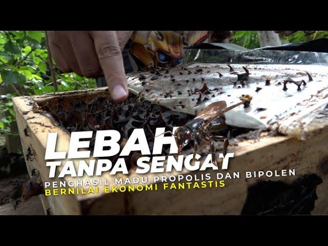 Budidaya Lebah Trigona di Hutan Kota Jakarta