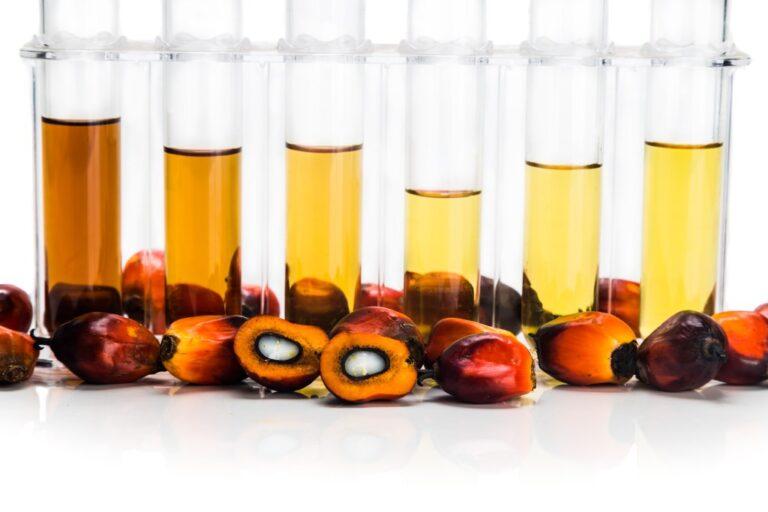 Kebutuhan Biofuel Tak Bisa Hanya Bergantung dari Minyak Kelapa Sawit