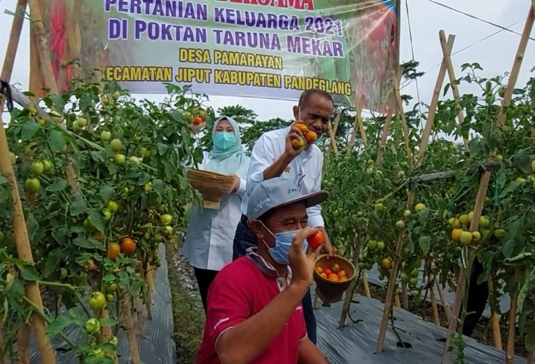 Bantuan Produktif Kementan Dorong Petani Terus Tingkatkan Produksi