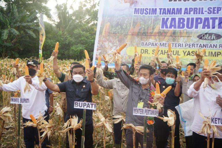 Program Kementan Korporasi Benih Jagung Mampu Berdayakan Petani