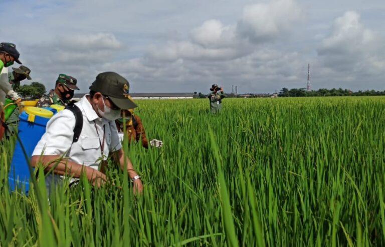 Kementan Dukung Penggunaan Pestisida Biologi
