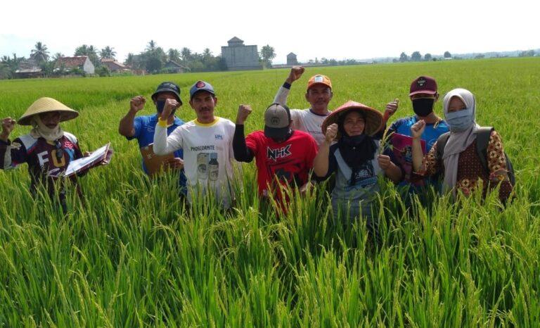 Refleksi Perjalanan Panjang 35 Tahun PHT di Indonesia