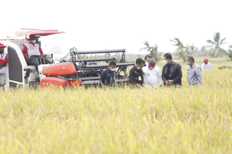 Pakar Pangan Universitas Andalas: Pertanian Indonesia Semakin Maju