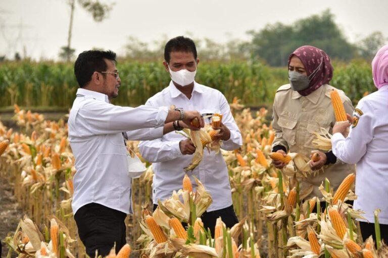 Stok Jagung Aman, Bupati Grobogan: Tolak Impor!