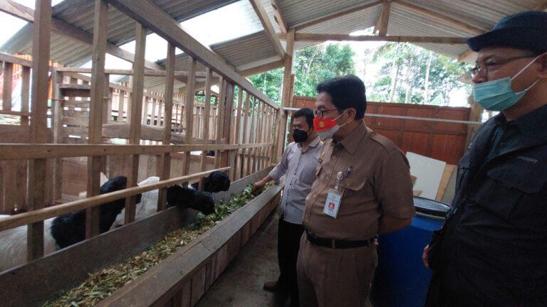 PKU Kulon Progo Tanam Jagung untuk Pakan Ternak