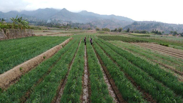 Kementan Bangun Kampung Hortikultura di Tahun 2022