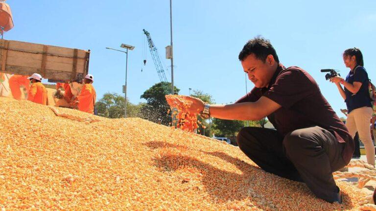 KTNA: Produksi Jagung Cukup, Ini Solusi Stabilisasi Pakan Ternak dan Harga Telur