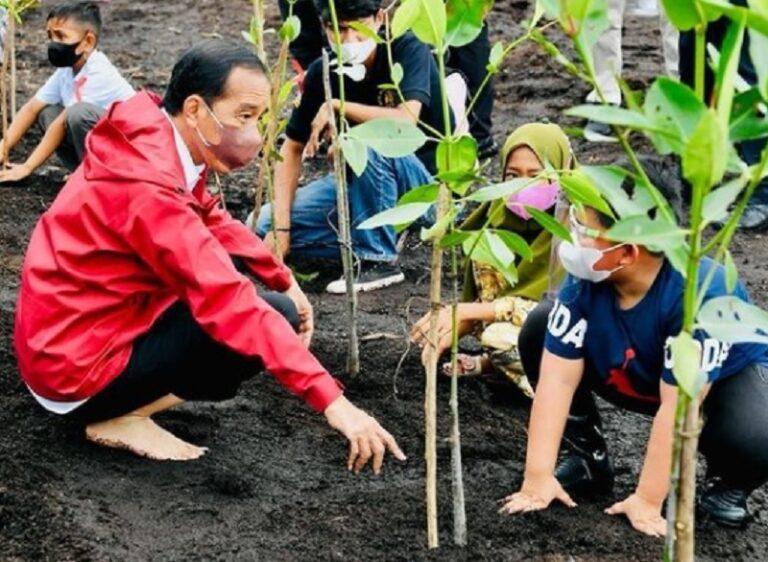 Aksi Jokowi Tanam Pohon Mangrove Tanpa Sepatu Tuai Pujian