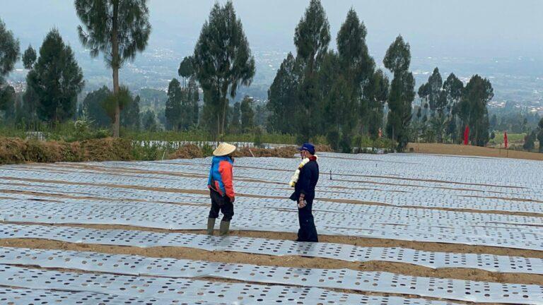 Bupati Wonosobo: Rencana Food Estate Membawa Harapan Memajukan Pertanian