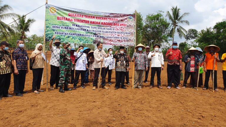 Kementan Gelar Tanam Serempak Kacang Tanah di Kabupaten Banyumas
